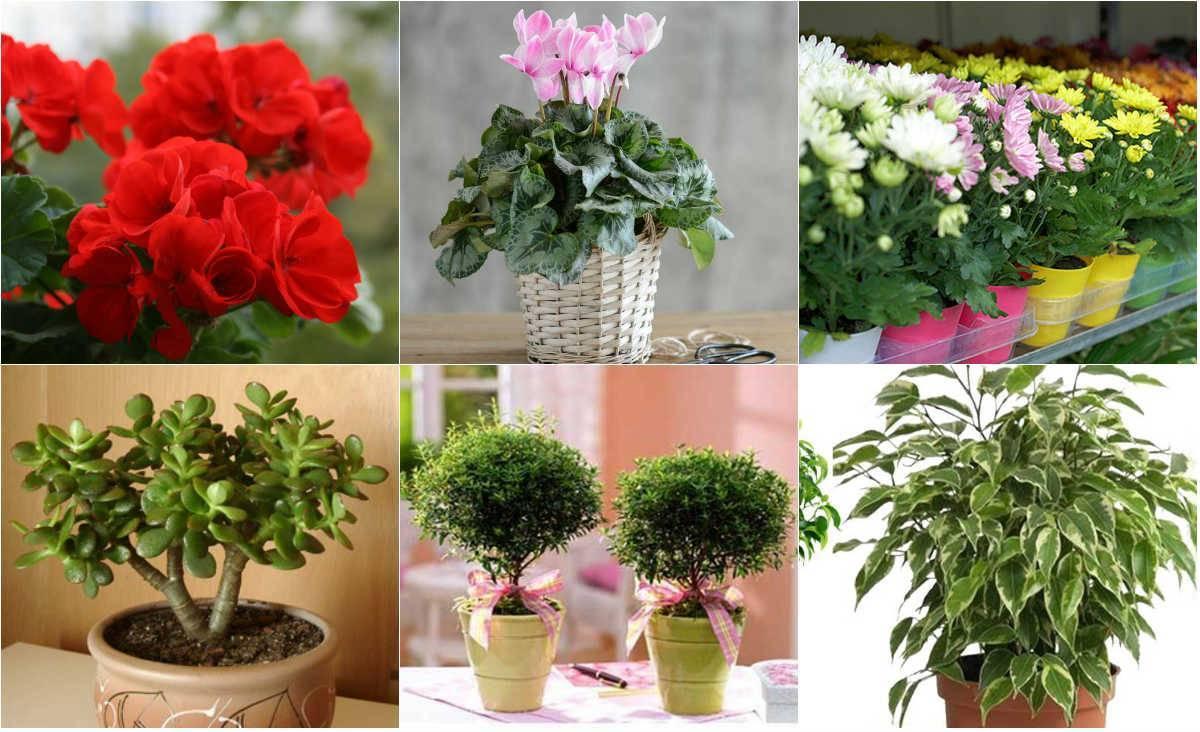 Оформление интерьера квартиры комнатными растениями - энциклопедия цветов