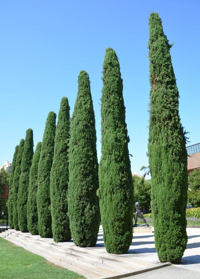 Какие виды кипарисовика существуют в природе? фото различных сортов растений, их название и описание