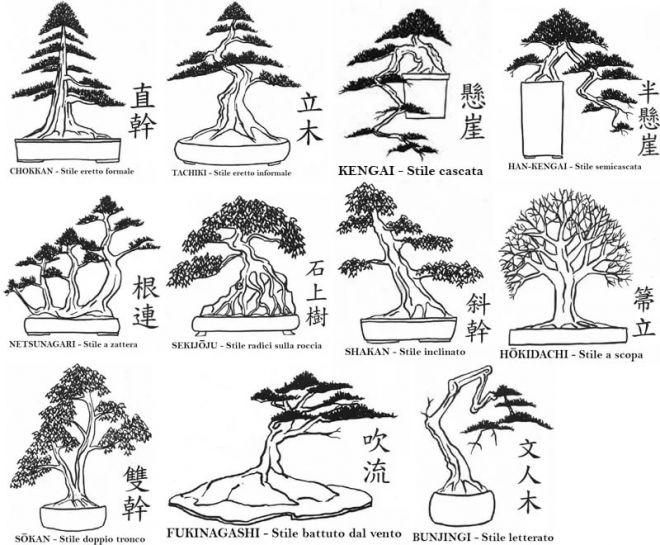 Бонсай из клена: разновидности и их описание