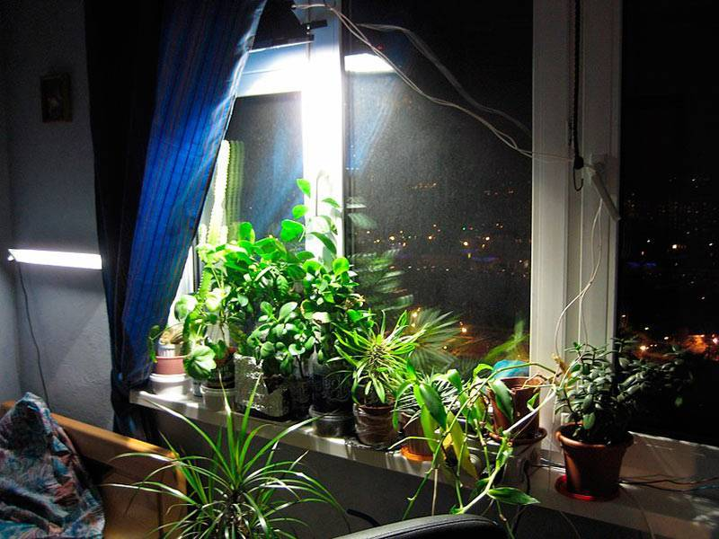 Растения, любящие тень и солнце, выносливые и прихотливые