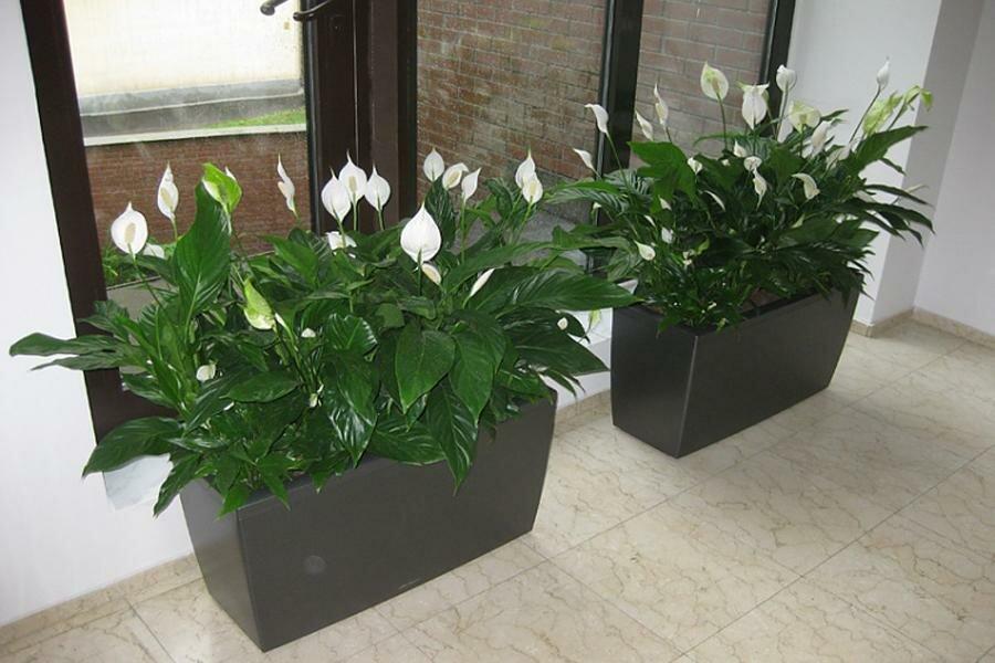 8 самых тенелюбивых комнатных растений