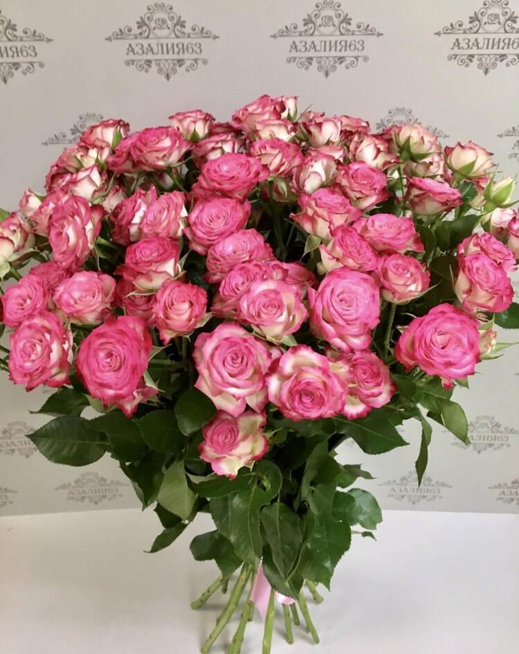 Розы (65 фото): как ухаживать за красивыми домашними цветами? уход за самыми высокими кустами в саду. как посадить розы?