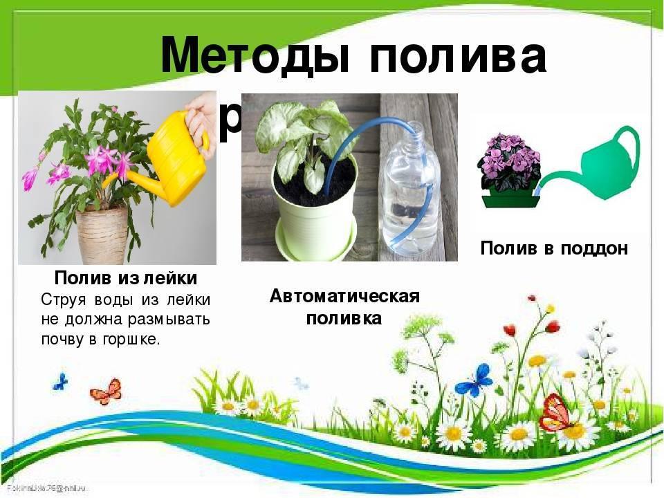 Полив садовых растений | как не следует поливать