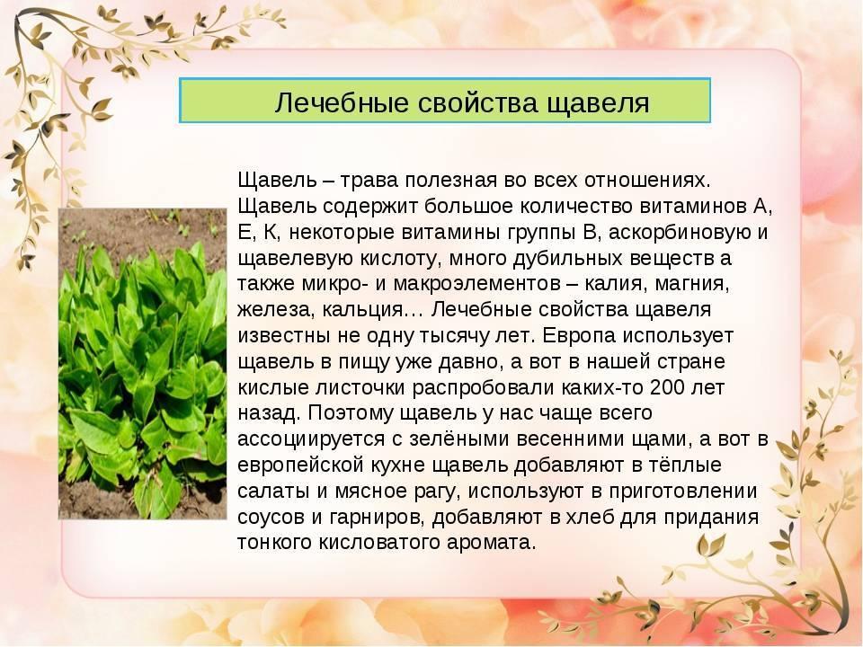 Крестовник луговой — полезные свойства, описание