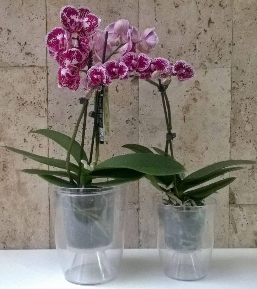 Горшок для фаленопсиса стеклянный и другие: как выбрать, какая емкость нужна орхидеям, чтобы пересадить растения, а также фото разной тары