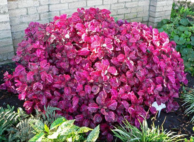 В чем важность удобрений для спатифиллума? когда подкармливать растение и как это делать?