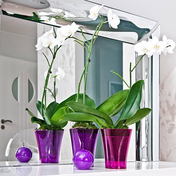 Прозрачный горшок для орхидеи: обязательно ли нужно сажать растение именно в такую ёмкость и для чего, можно ли выбрать пластиковый вариант или нет и почему?