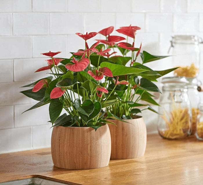 Цветник без полива: засухоустойчивые цветы для клумбы на солнце