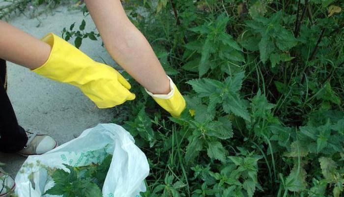 Как избавиться от вьюна на огороде навсегда