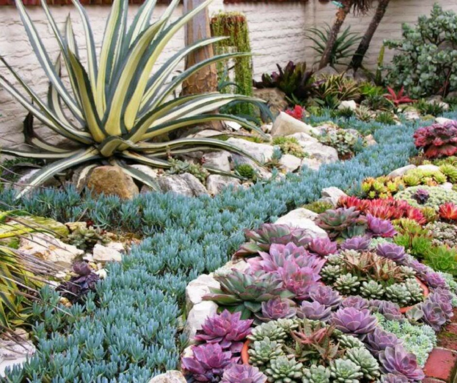 Низкие стелющиеся цветущие многолетники. почвопокровные многолетники: личный опыт выращивания