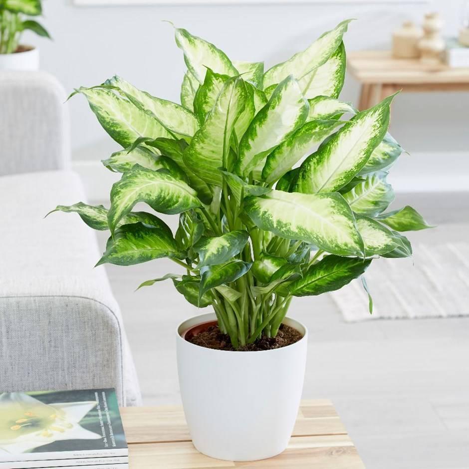 Декоративно-лиственные и декоративно-цветущие растения
