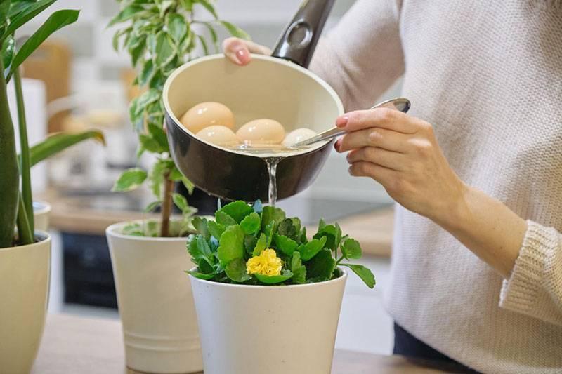 Когда и как подкармливать комнатные растения?