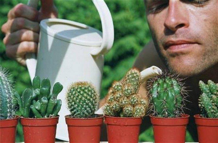 Правила полива кактусов