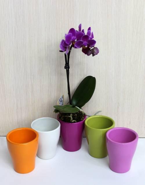 Горшок для орхидеи: какой нужен, как выбрать лучшую емкость, чтобы правильно посадить цветок, должны ли быть дырки, как определить размер, а также фото вариантов