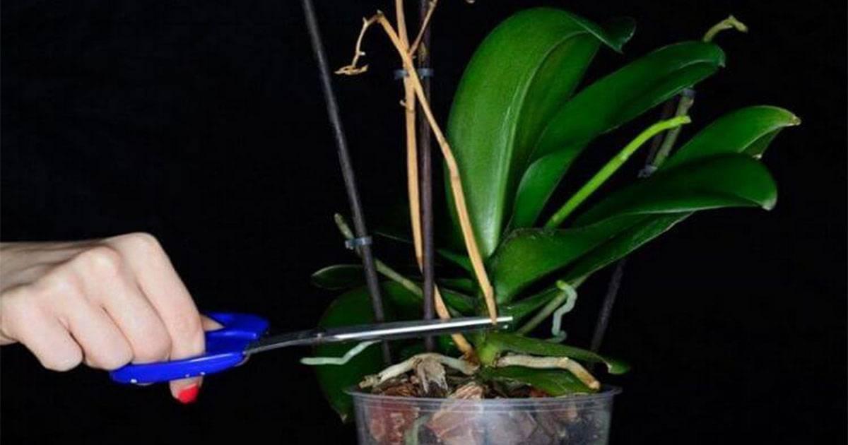 Как заставить орхидею цвести в домашних условиях