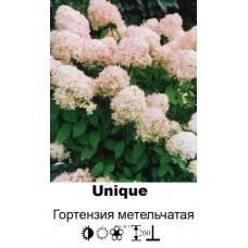 Гортензия юник (unique) или уник — описание - pocvetam.ru