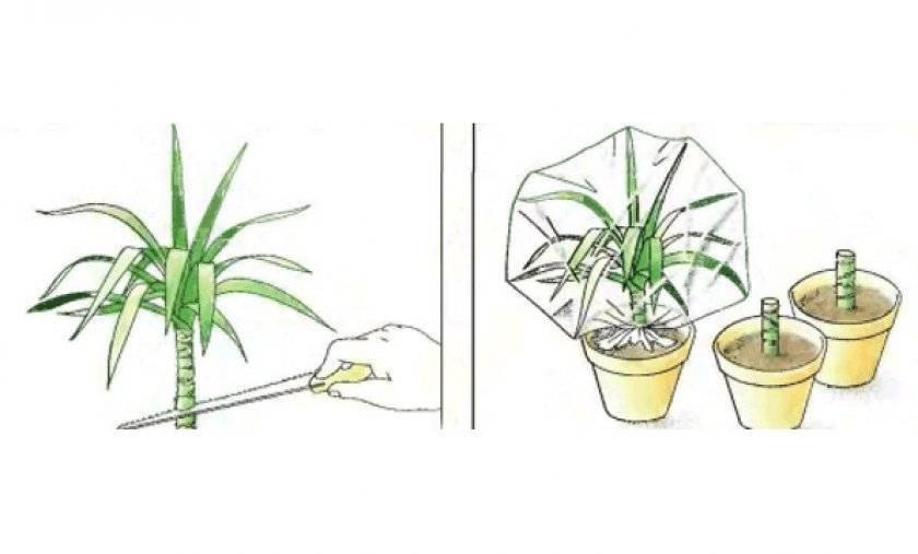 Размножение кактусов: фото, видео, как размножить кактусы в домашних условиях детками, черенками, семенами и прививкой