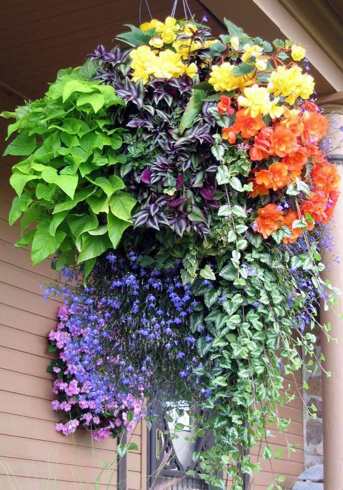 Ампельные неприхотливые многолетние цветы для сада