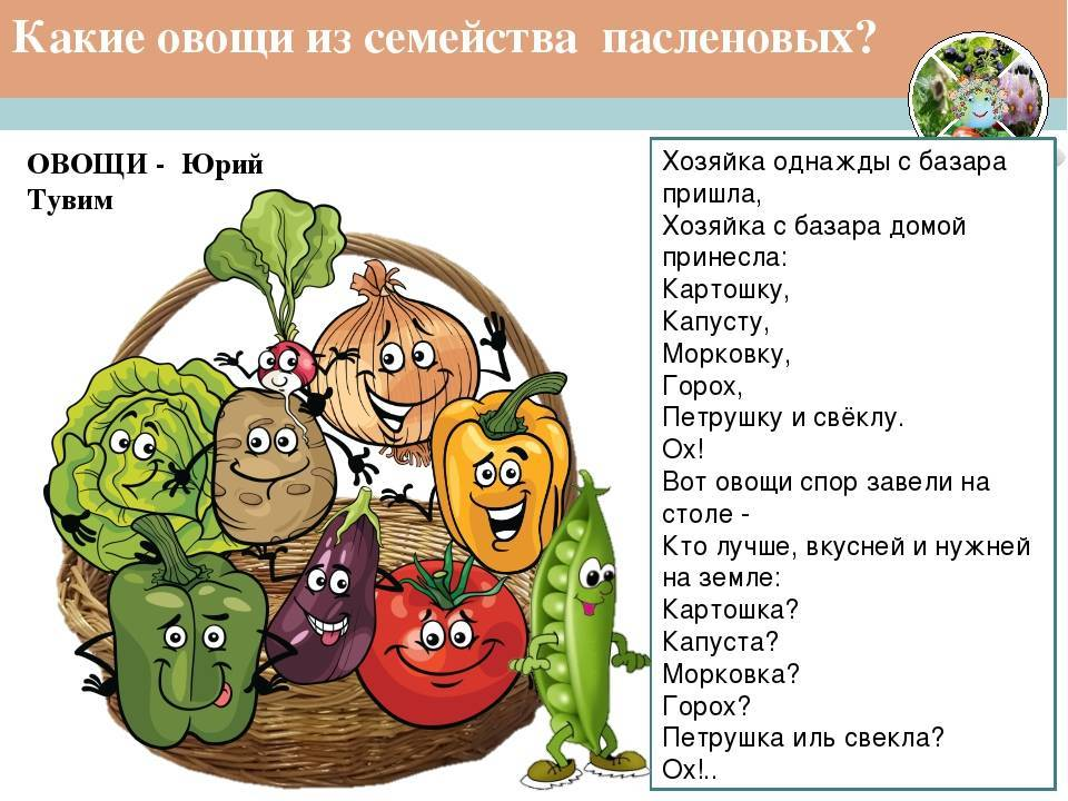 Пасленовые культуры, что к ним относится. овощи