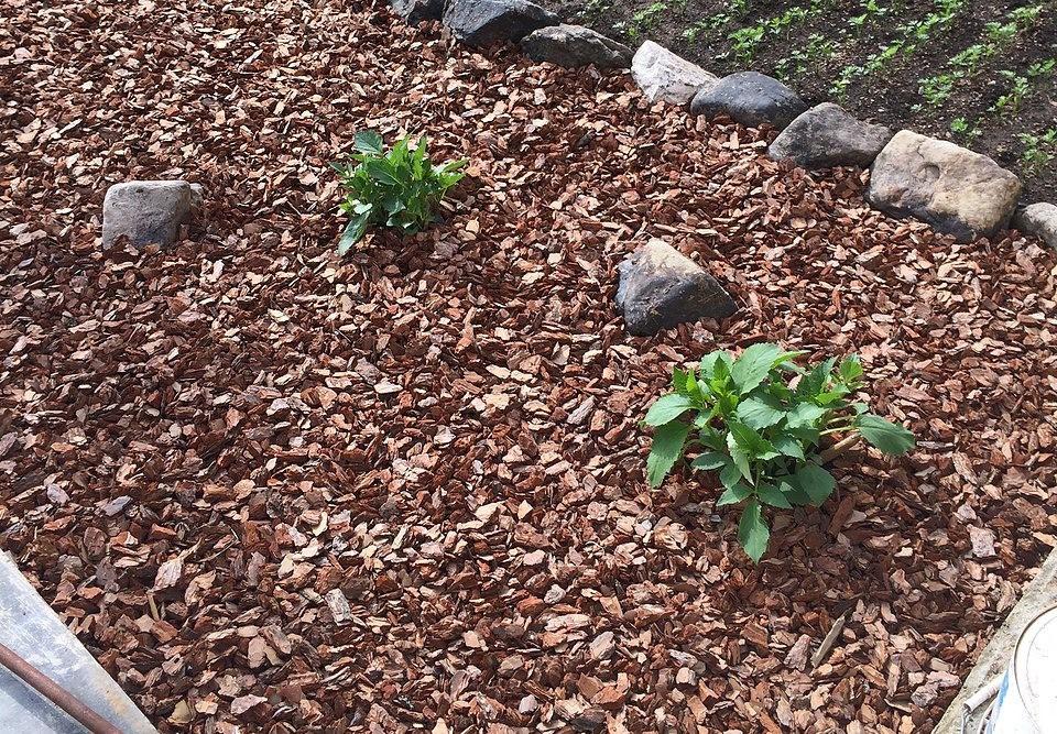 Уход за розами: подкормка, полив, мульчирование, прополка, рыхление, какие удобрения для роз