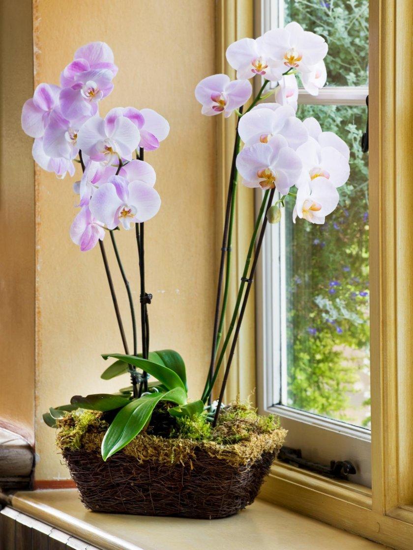 Орхидея ванда: основные сорта и варианты ухода в домашних условиях - pocvetam.ru