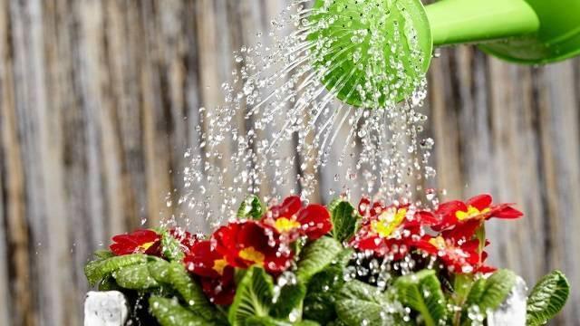 Как поливать алоэ