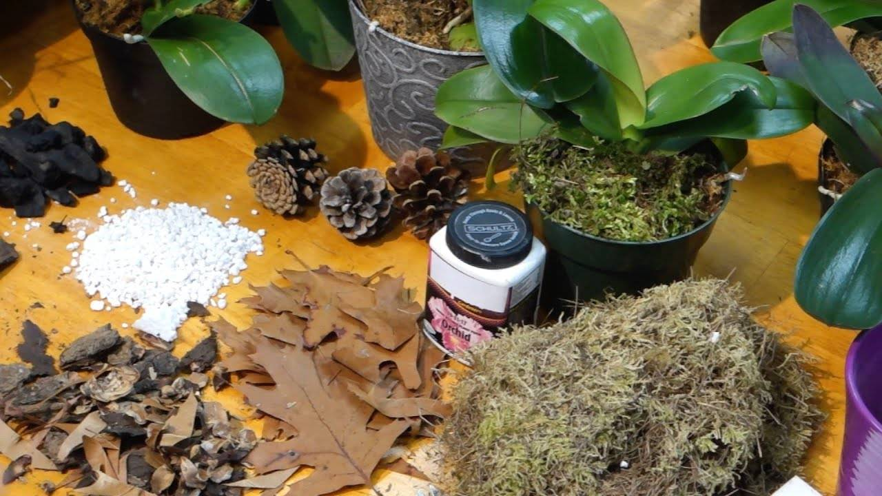 Субстрат для орхидей — какой лучше для выращивания