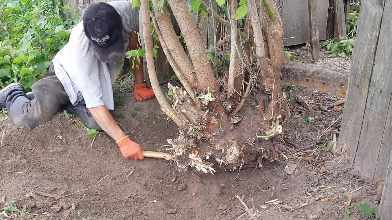 Как навсегда избавиться от корней деревьев на участке?