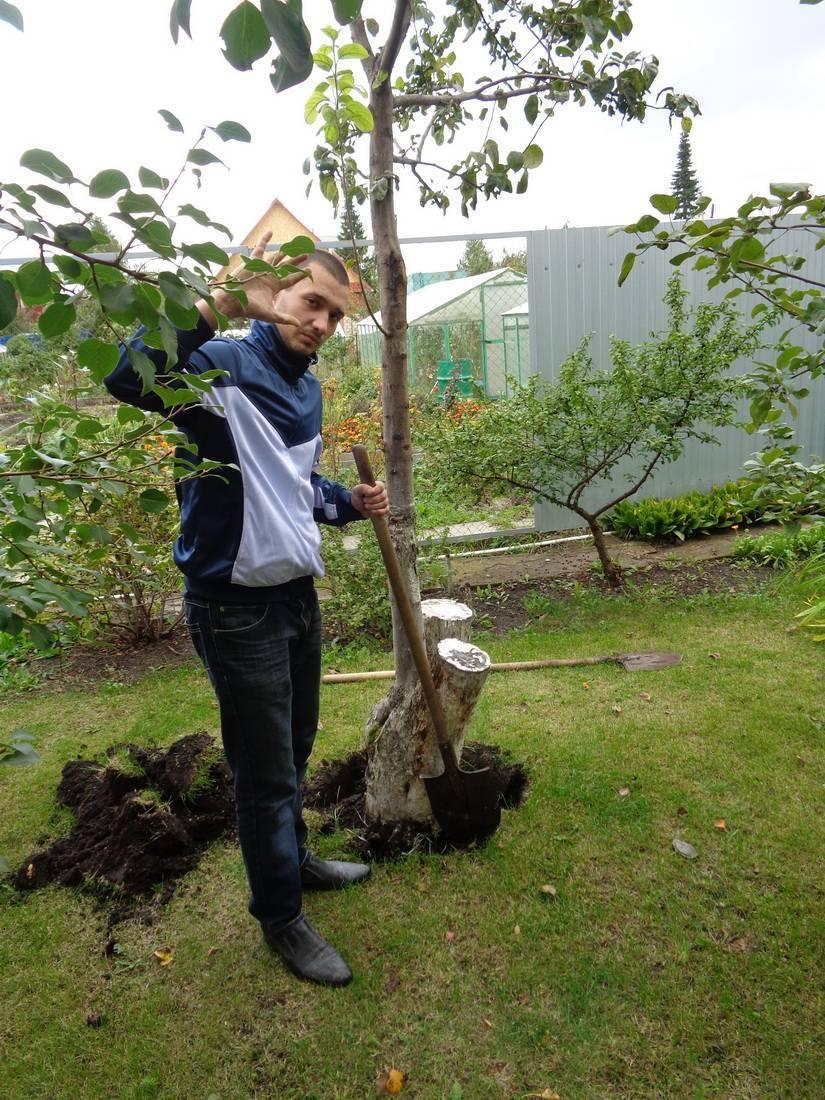 Чем полить дерево, чтобы оно быстро засохло