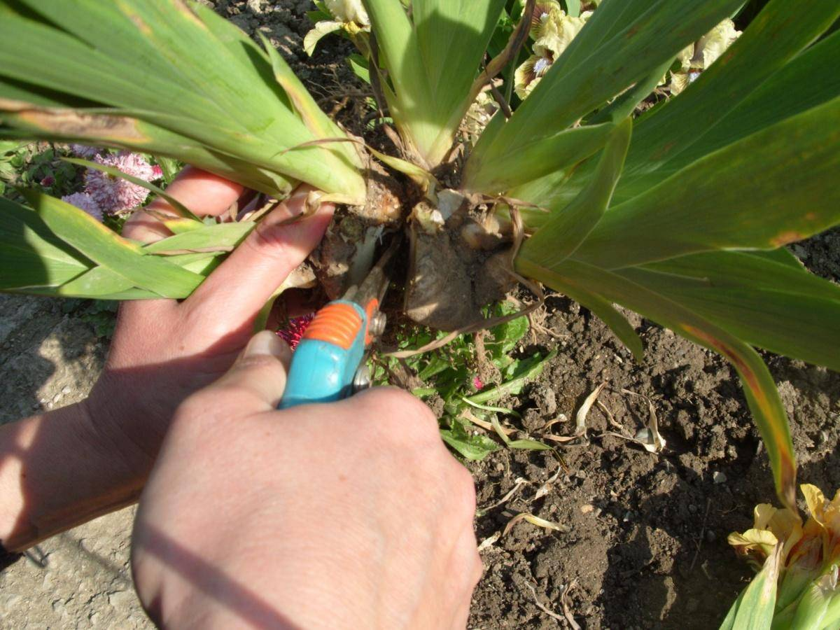 Выращивание бархатцев из семян: когда сажать в домашних условиях и в открытый грунт, как грамотно размножить чернобривцы и ухаживать за цветами на участке?