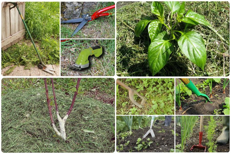 Как избавиться от сорняков на участке навсегда – проверенные способы