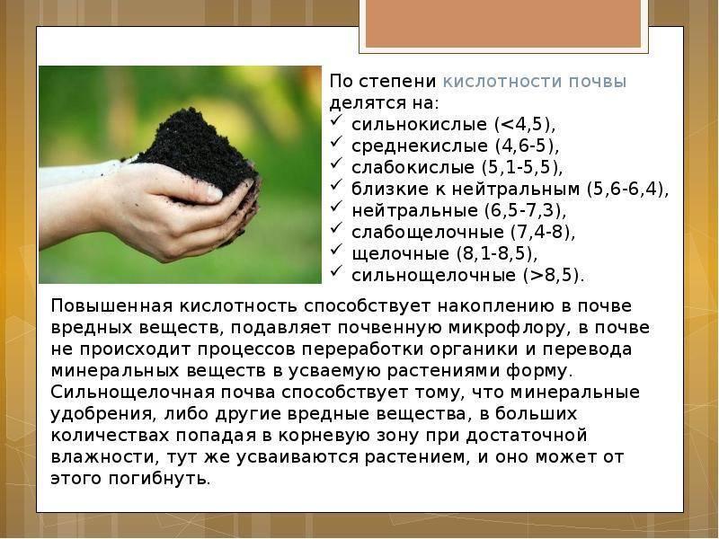 Какая почва нужна для драцены в домашних условиях: подбор и посадка
