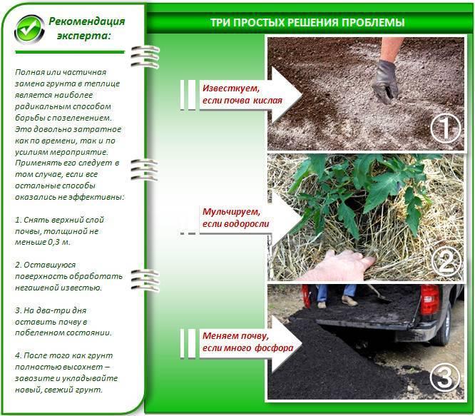 Как ощелачивать почву для комнатных растений