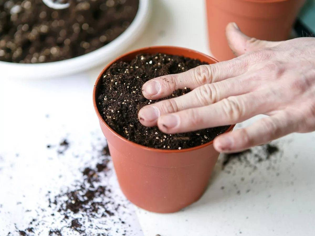 Как вырастить бегонию из семян в домашних условиях