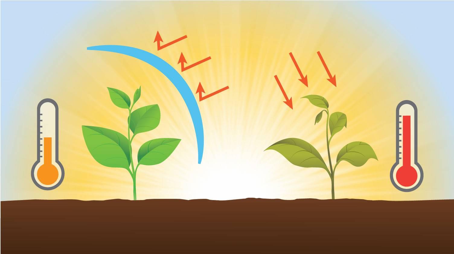 Неприхотливое и красивое растение — гипоцирта голая. особенности выращивания и ухода