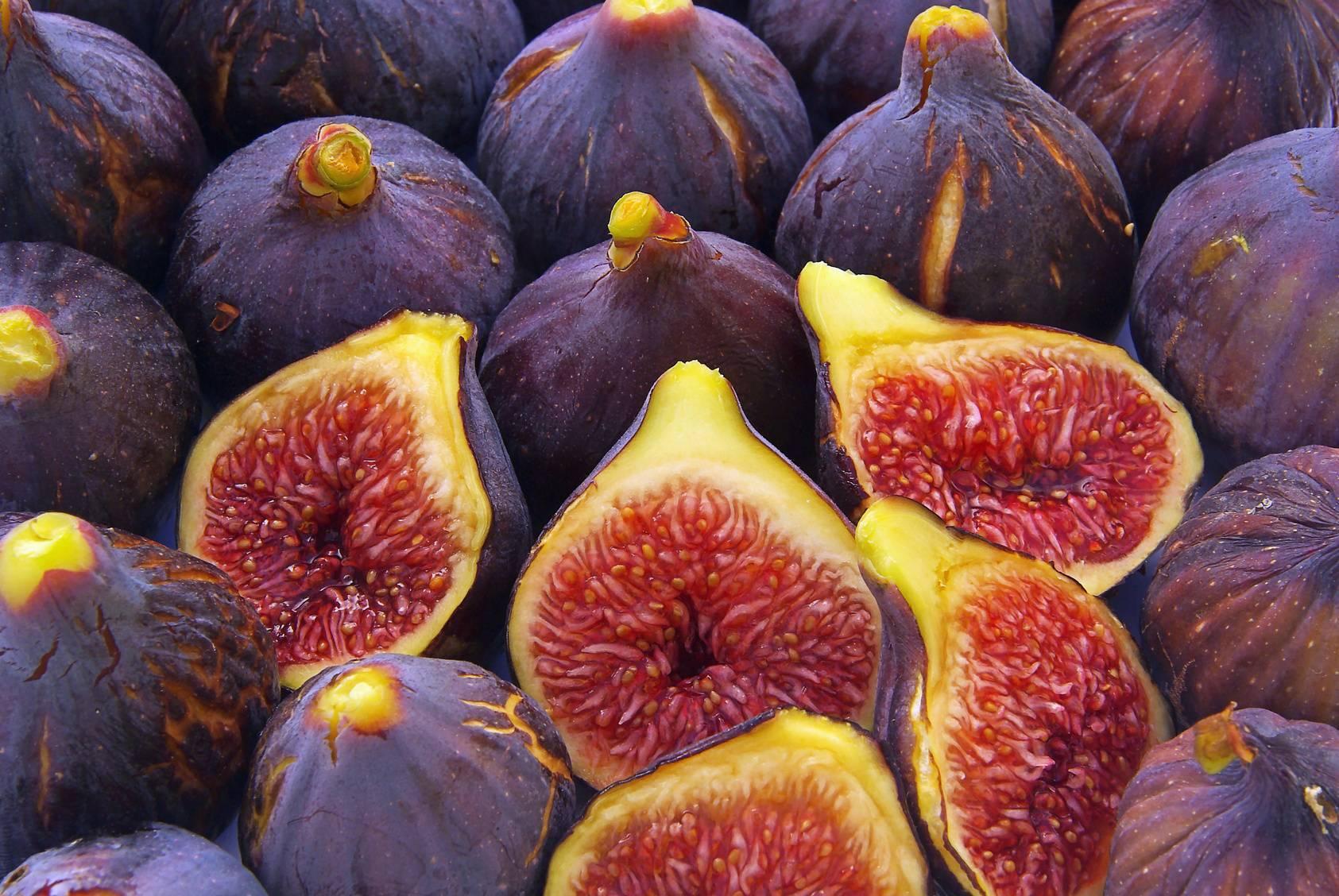 Фото деревьев и плодов инжира