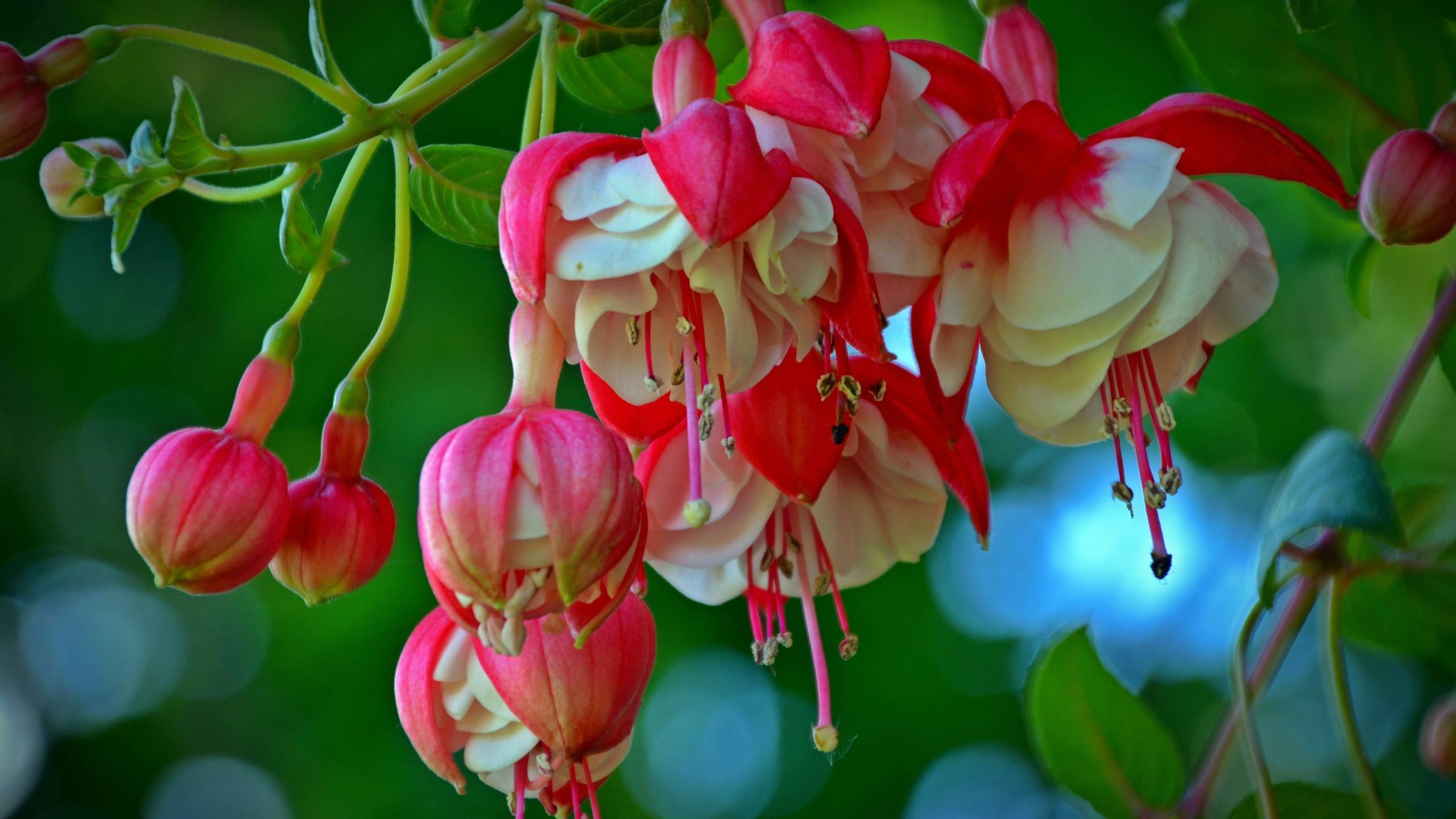 Чем подкормить лилейники перед цветением и после,