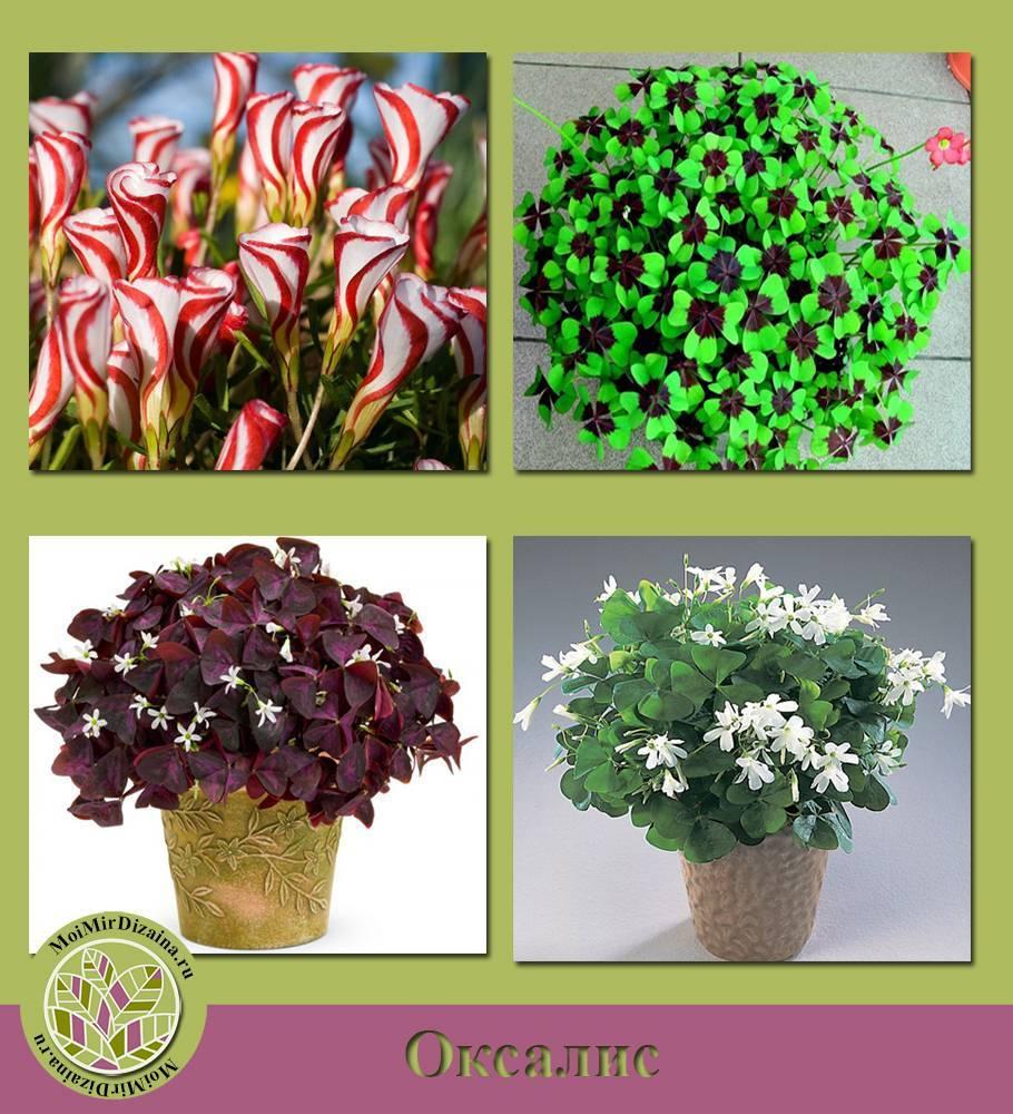 Какой выбрать цветок любви: 7 проверенных растений, приносящих в дом счастье и благополучие