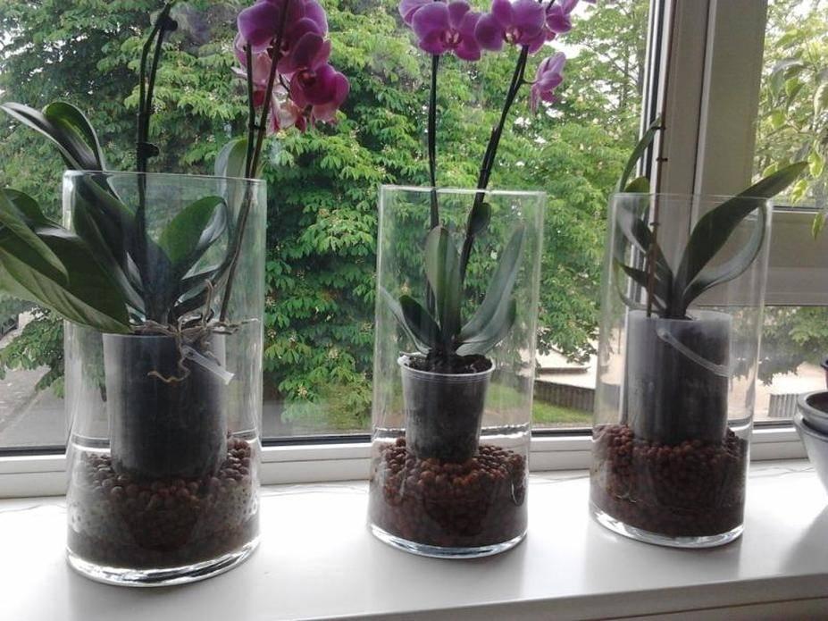 Пересадка орхидей в домашних условиях: когда и как