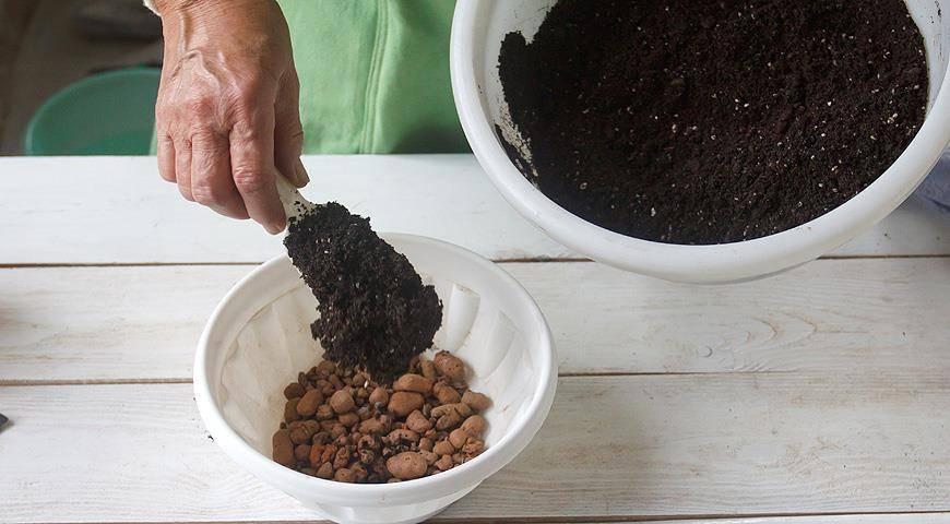 Как размножить бегонию стеблевыми черенками – мастер-класс с фото