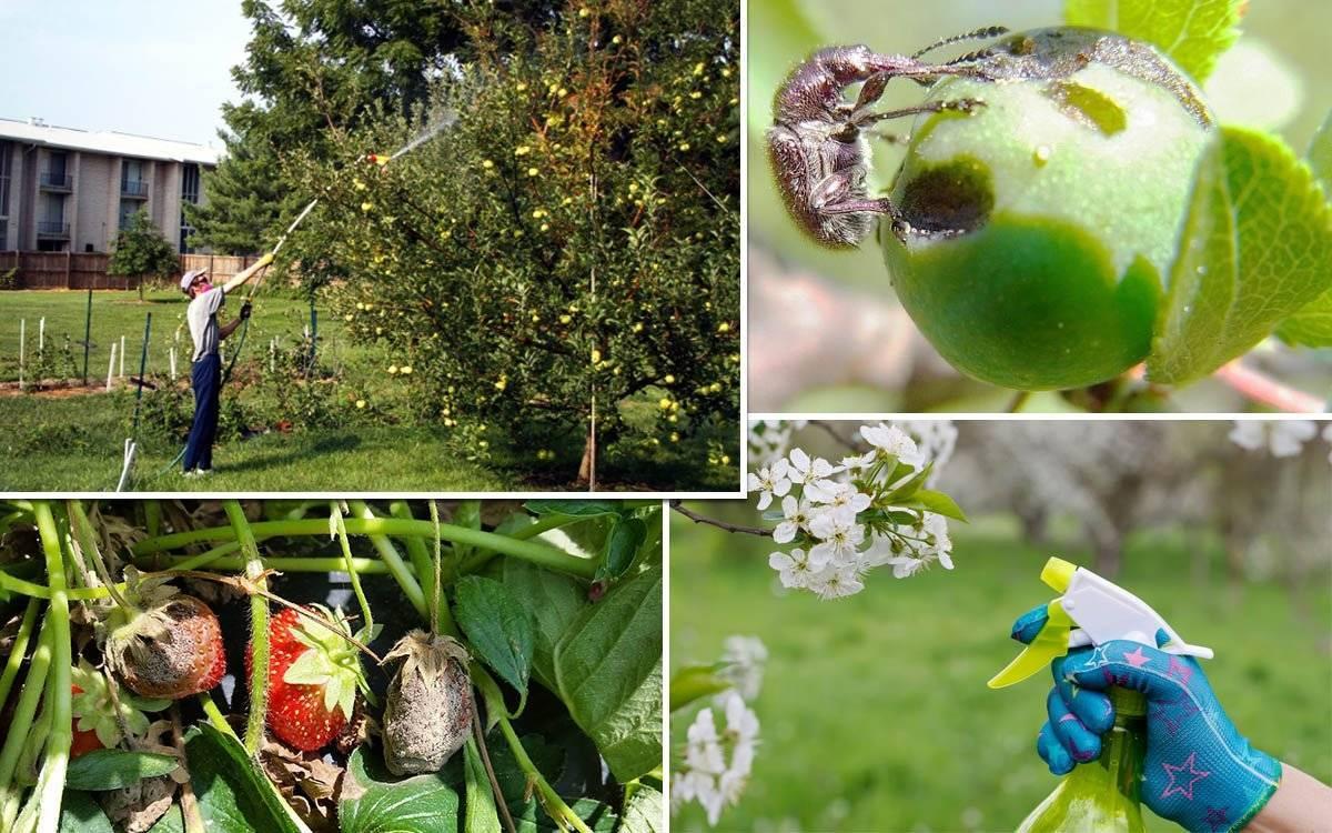 Боремся с вредителями и болезнями деревьев: обработка и опрыскивание весной