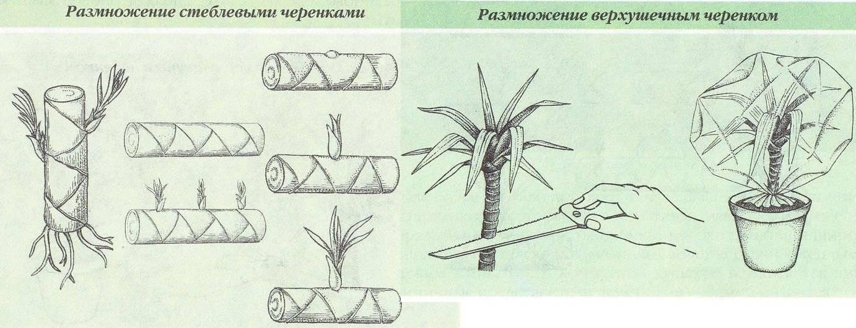 Комнатное растение бамбук: особенности выращивания и возможные проблемы