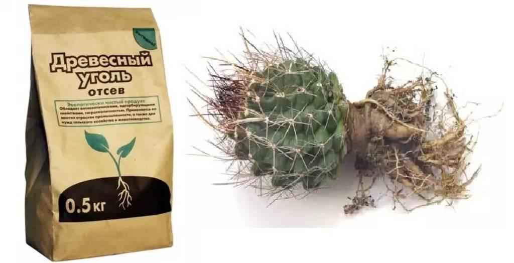 Грунт для суккулентов: варианты пересаживания и выращивания