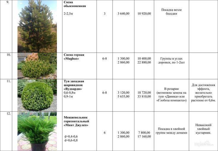 Декоративные кустарники - 140 фото лучших растений и советы по выбору места для их посадки
