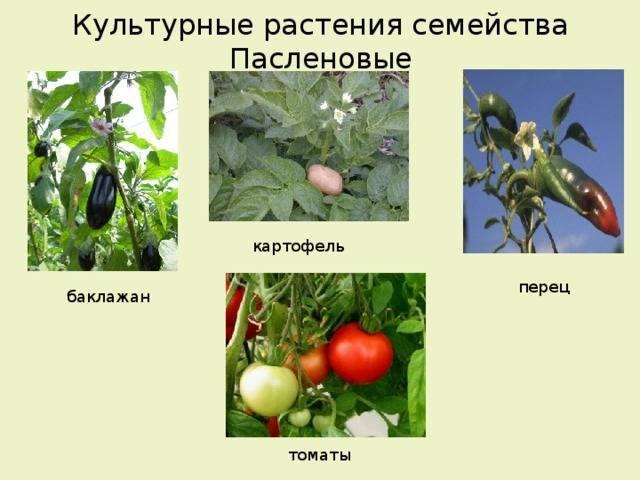 Классификация овощных культур на огороде