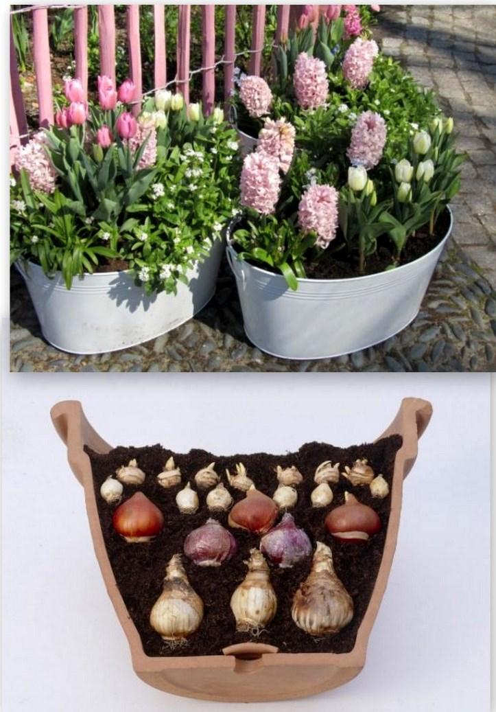 Выращивание гладиолусов в горшках на улице