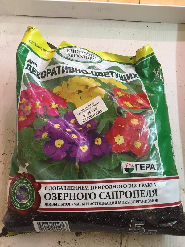 Какой грунт нужен для выращивания кактусов?