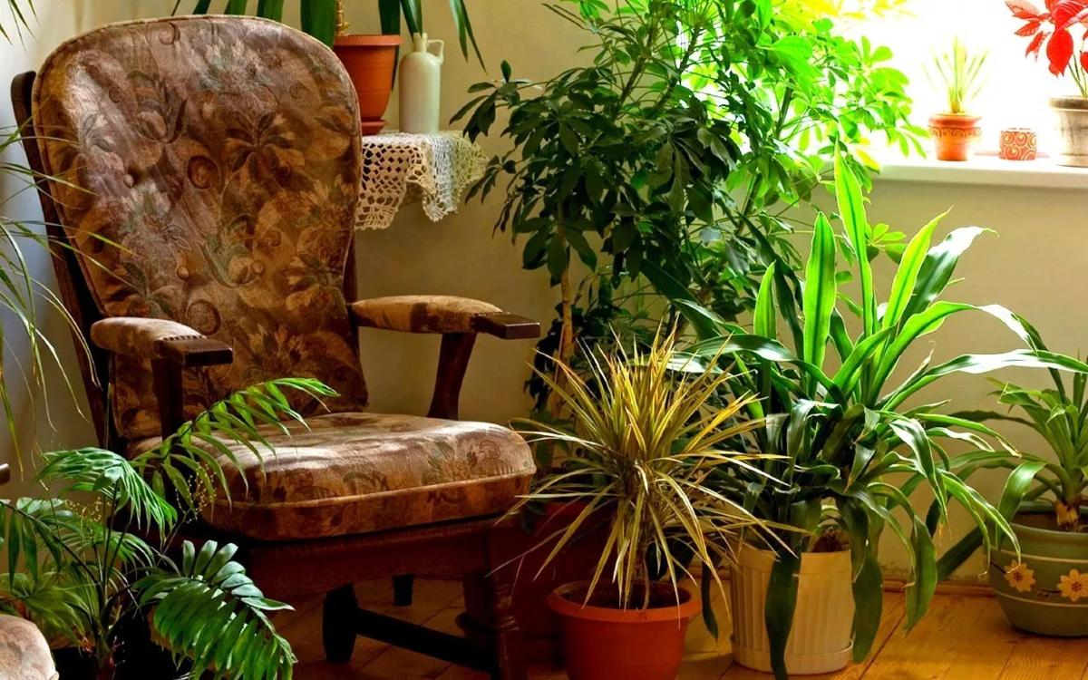 Растения для темных помещений дома, которые любят темноту и им не нужен свет