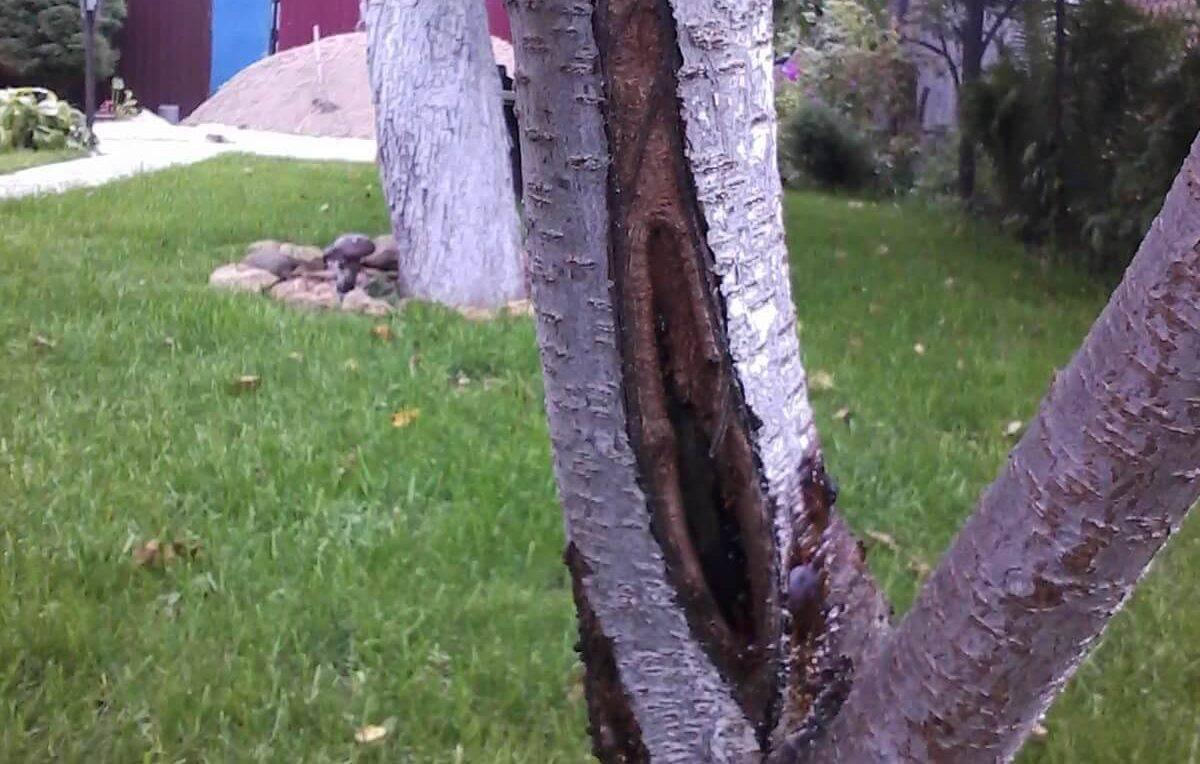 Основные болезни фруктовых деревьев — причины развития, методы лечения