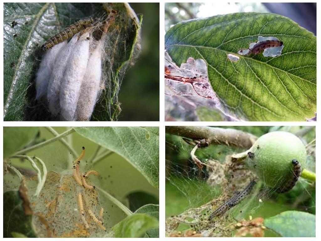 Борьба с гусеницами в саду и огороде – чем обрабатывать растения